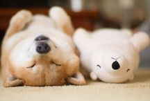 Dogs that Catch Zzzz's /  Dog and puppies that don't skip nap time!