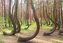 Spesielle trær