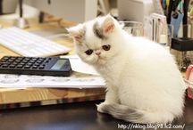 Cat's♡
