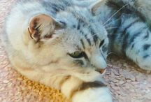 My cats♥
