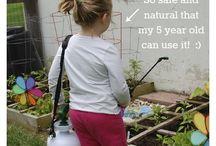 Essential oil in the garden