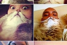 OMG Too funny Cat Beards (and dogs)