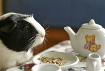 Guinea Pigs! / by April Sloop