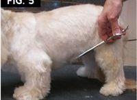 Strihanie psíka