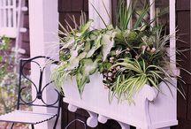 Balkony i kwiaty balkonowe