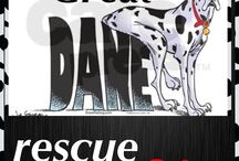 GREAT DANE RESCUE SOUTH AFRICA / Great danes in need of new homes
