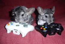 I <3 Chinchillas / Yes, I love chinchillas!!!!!!!!!!!!!!!!!!!!