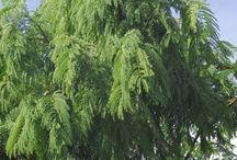 Tree Spotting / Tree identification