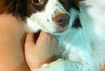 Momo / My dog