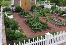 Pretty Vegetable Garden