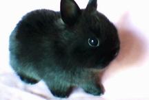 Zvieratka :)