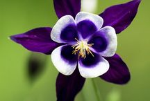 Flores - Diversas
