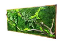 Moss / Moss projects