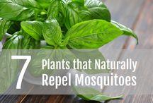 Pest Control Advice