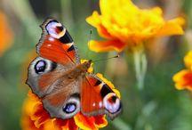 ♥ motýl ♥ /  Štěstí je jako motýl:když se ho snažíš dohonit,nikdy ho nechytíš,ale když si klidně sedneš,může se posadit přímo na tebe... :)