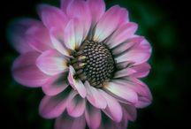 Virág varázs