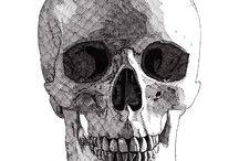 Portfolio - Skulls / Skull drawings