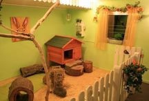 Indoor rabbit ideas
