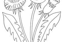 Színezők/rajzok