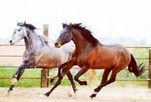 Horsecity.com Classifieds / For only $5, you can post an add, with a photo, YouTube video, pedigree, and much more!  http://horsecity.cpgclassifieds.com/