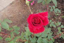 moje zahrádka a pokojové květiny