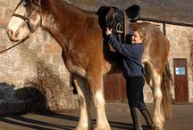 Biggest Horse in the World: Digger