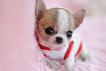 Cute animal. Søte dyr