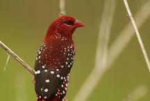 Birdly Birds / by Cheryl Hunt