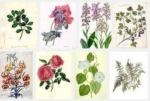 NINCS NEVE MÉG / botanik