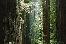 Nature / #landscape #nature #photography
