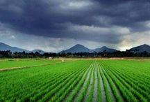Berdikari di Bidang Pertanian dan Peternakan