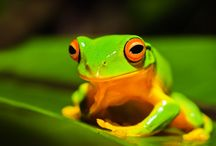 Daintree Wildlife / All creatures great and small of the Daintree Rainforest