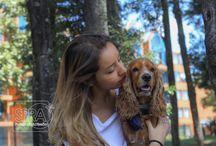 SPRA_Mascotas
