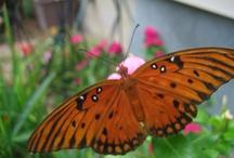 Butterflies / by Myra Luker