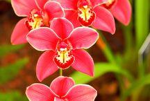 flowers / by Desiree Jones