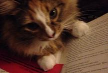 Our Pet Picks! / Library staff pets with their favorite books.
