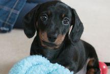 puppy luv......