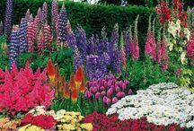 Trädgård blommor
