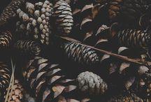 Autumn Trends / Es windet, stürmt und regnet draußen... - Der Herbst ist da! Wir präsentieren Dir die angesagtesten Herbst-Schuh-Trends der Saison 2017/2018 und machen richtig Laune auf kühle Tage