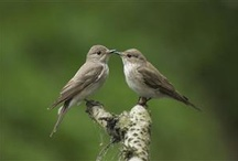 Birds of a Feather / It is not only fine feathers that make fine birds.  / by Debbie Price