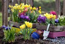 Přesazování květin - jaro