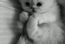 Животные)))