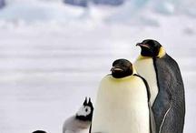 keramik pingviner