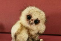 Cute Little Creatures