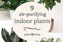 Συμβουλές κηπουρικής-Λουλούδια