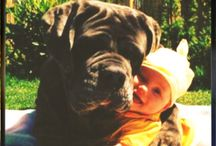 Babies&Puppies / Cuccioli e Bimbi....il connubio perfetto!