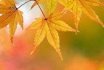 Fallin' into autumn! / by Stephanie Coffey