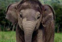 elephants babies