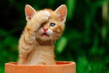 Animals - Cats/Kittens / by Jan Vafa