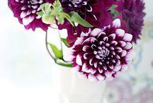j'taime fleur / by Treena Sexsmith